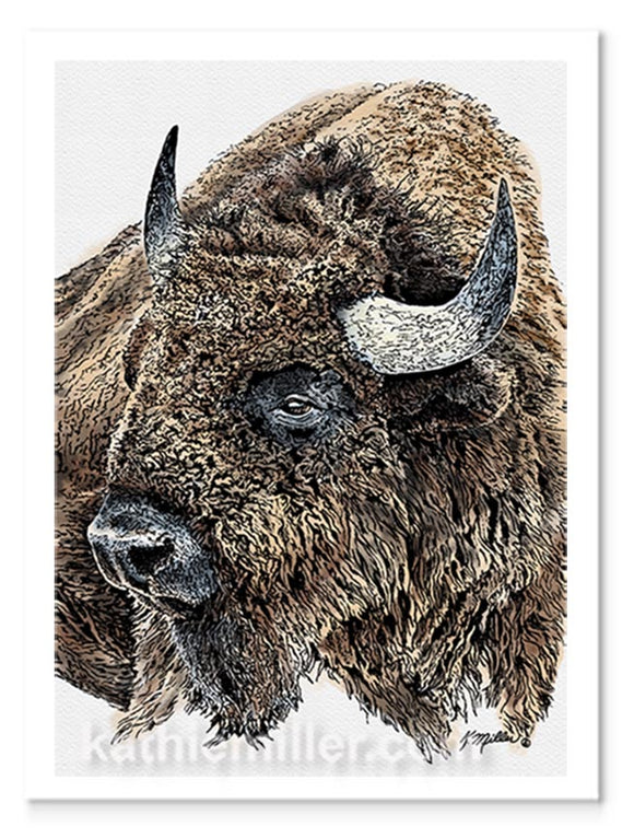 Ink and watercolor portrait of an American Bison by award winning artist Kathie Miller