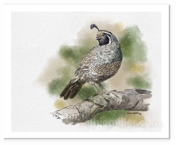 Watercolor painting of a California Quail by award winning artist Kathie Miller.
