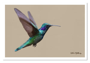 Painting of a Charming Hummingbird in flight by award winning artist Kathie Miller