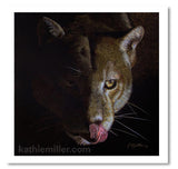 Portrait of a cougar drinking against a black background by award winning artist Kathie Miller.