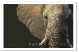 Elephant portrait painting by award winning artist Kathie Miller.