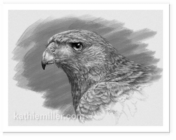 Harris Hawk Drawing
