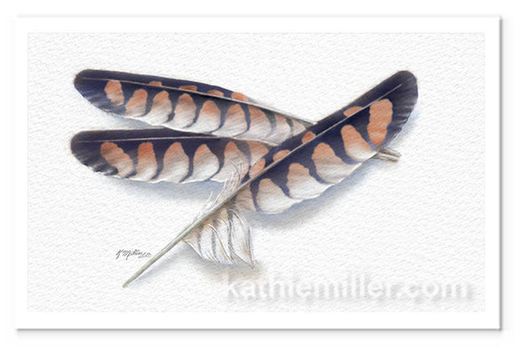 American Kestrel feathers painting by award winning artist Kathie Miller.