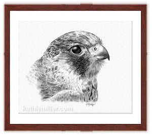 Lanner Falcon Drawing