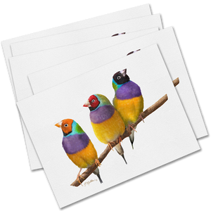 Set of 5 Gouldian Finches Greeting Cards-Kathie Miller