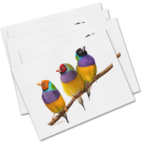 Set of 5 Gouldian Finches Greeting Cards