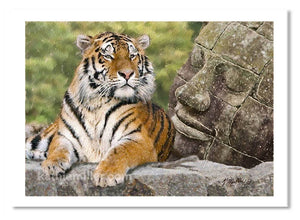 Tiger and the Buddha