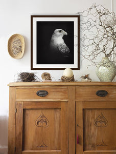 White Gyr on Black-Kathie Miller