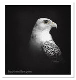 White Gyr on Black