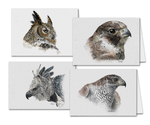 Set of 4 Greeting Cards Birds of Prey