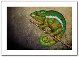 Digital painting of a tiger chameleon by award winning artist Kathie Miller