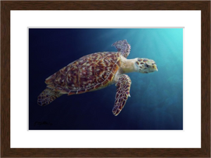 Sea Turtle-Kathie Miller