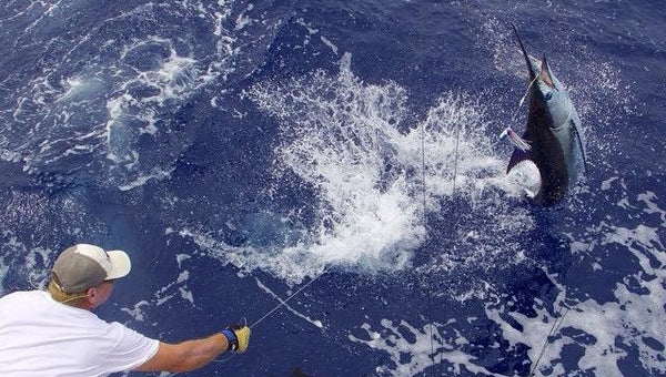 Marlin Magic, Kona, Hawaii, Sport fishing