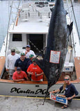 Marlin Magic II trophy fish