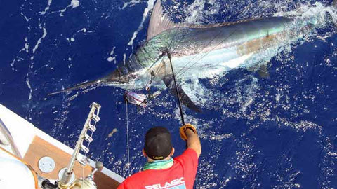 Marlin Magic getting a big Marlin Hawaii Deep Sea Fishing
