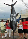 big blue caught october 5, 2014 484 lbs blue marlin on Piper