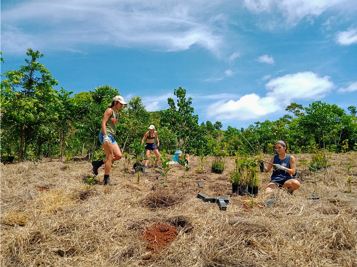 ReForest Now - Sweet Nutrients - Giving Back