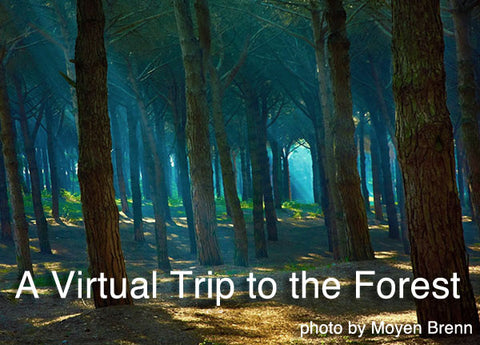 Deepak Chopra's Intro: Virtual Trip to the Forest - 21:41 - (CD)