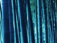 Bonsai Blue Bamboo Seeds