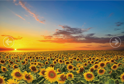 Sunset Sunflowers Field 1000 Pieces Jigsaw Puzzles