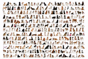 All Dog Breeds Chart 1000 Pieces Jigsaw Puzzles