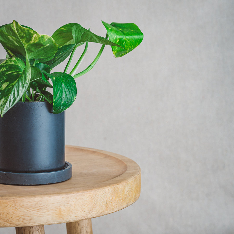 Classic Cement Planter + Tray - Slate