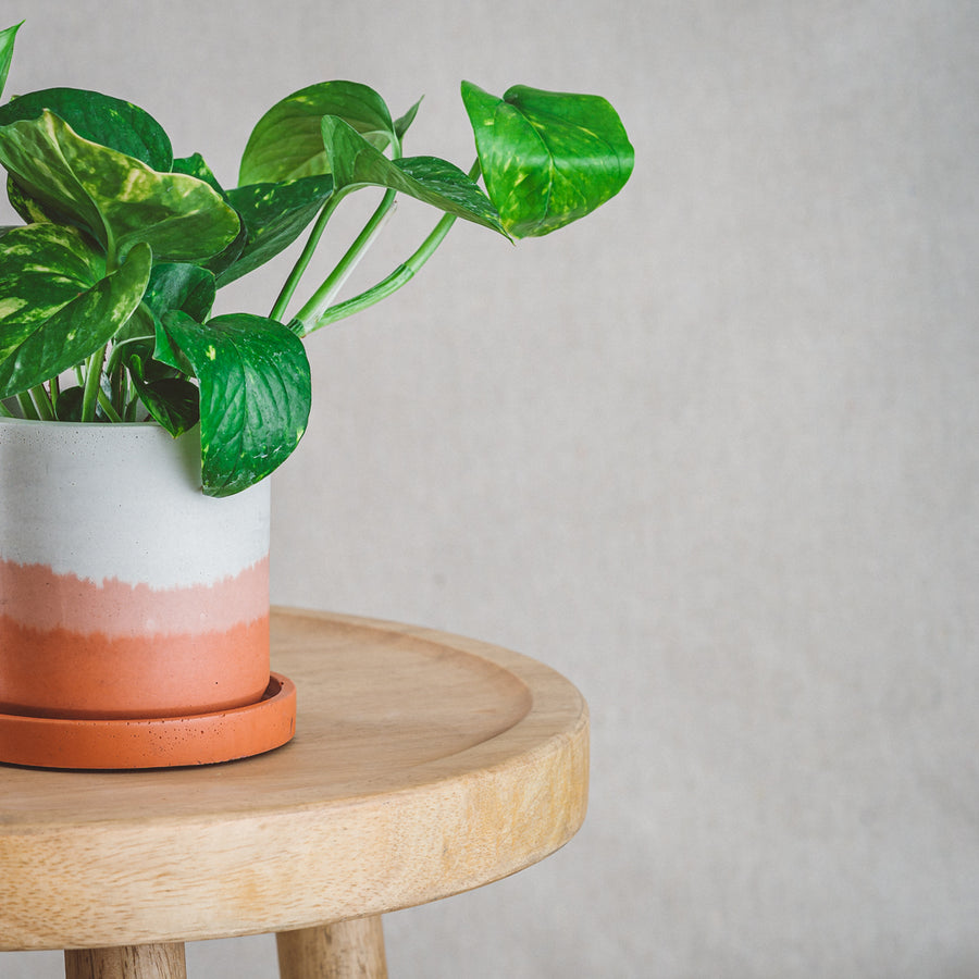 Classic Cement Planter + Tray - Rust Ombré