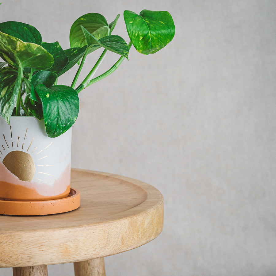 Classic Cement Planter + Tray - Golden Sunrise