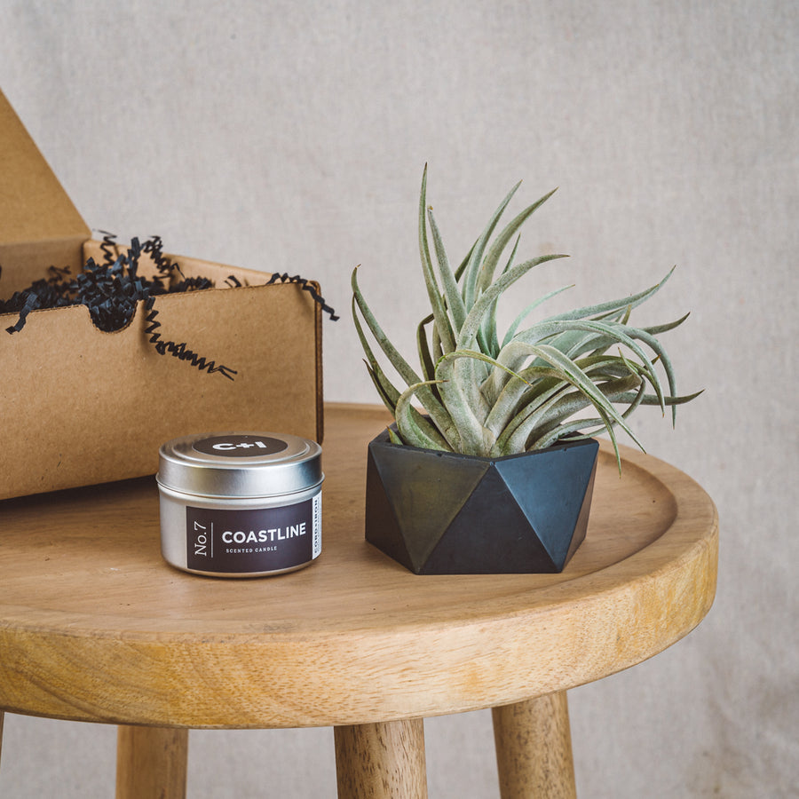 ANYTIME GIFT BOX | Icos Planter + Air Plant + Soy Travel Candle