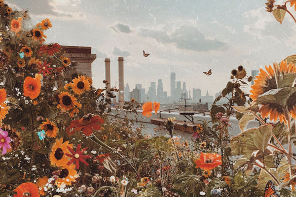 Flowers and Nature in Urban Photography Prints by Siobhan O'Dwyer