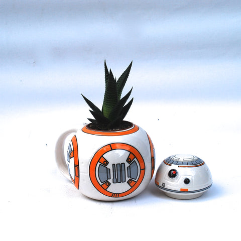 Succulent in BB8