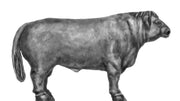 NEW - Belted Galloway bull (28mm)