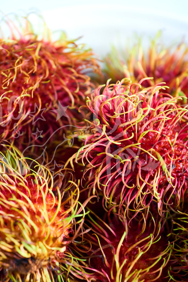 Rambutan Up Close