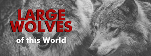 Large Wolves of the World