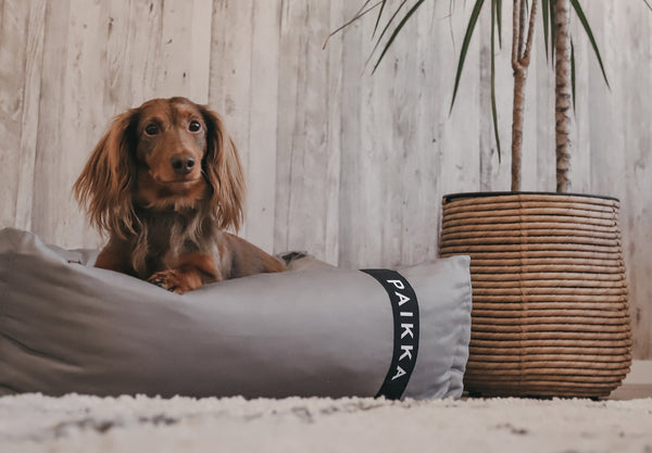 How to choose a dog bed: For Large Dogs and Small.