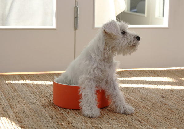 Cool Water Bowl