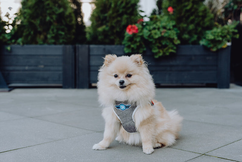 VSCO Dog Harness - Blue