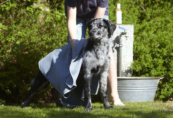Panno Dog Towel