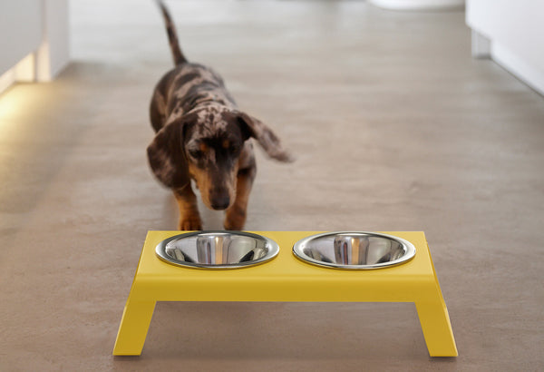 Desco Dog Feeder / Yellow