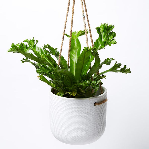 Tweed Hanging Planter