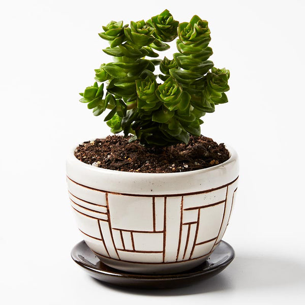 Shelfie cone planter