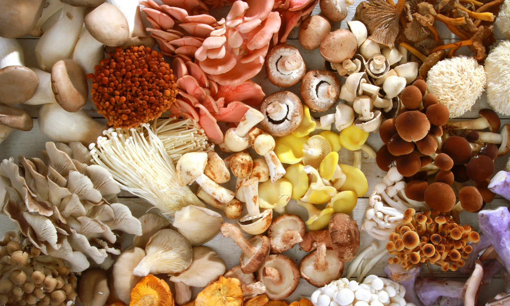 what are the benefits of functional mushrooms?