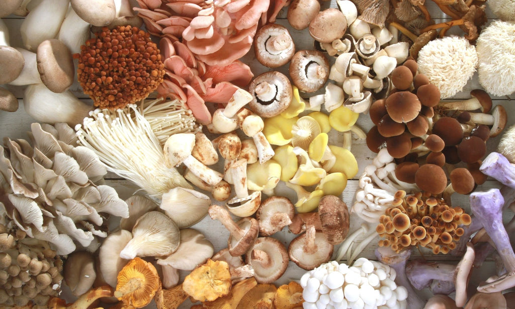 functional mushrooms for stress