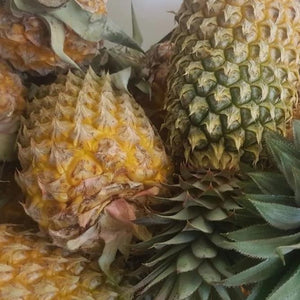 Pineapple Suckers