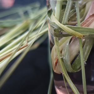 Lemongrass-Herbs and Spices-Prasads Organic Supplies-Aggie Global Fiji