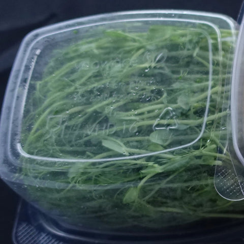 Pea Shoots-Garnish-Gaiatree Sanctuary and Elevate-45g-Aggie Global Fiji