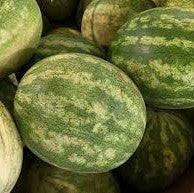 Seasonal Watermelon-Fruit-Watermelon Farmer Ajmal-Aggie Global Fiji