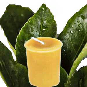 citronella votive beeswax candle