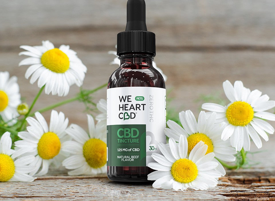 Bootle of We Heart CBD Tincture for Pets among daisies