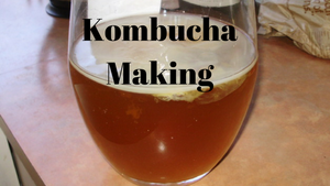 What is Kombucha aka the Elixir of Life?